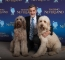 Sammy (Porthos), Bill Berloni and Bailey (Understudy) from the National Tour of Finding Neverland Credit KSP Images.jpg