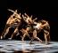 Bruce Wood Dance photo: Sharen Bradford – The Dancing Image