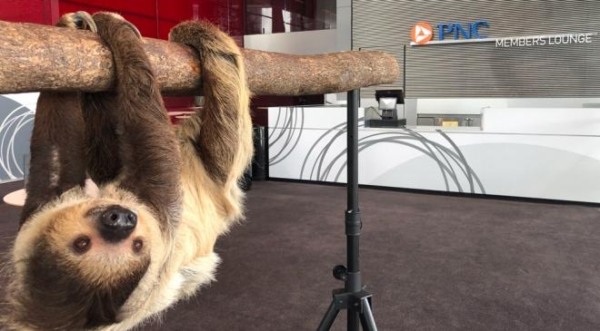 sloth1000X553.jpg