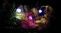 OCCC-glowforest.jpg